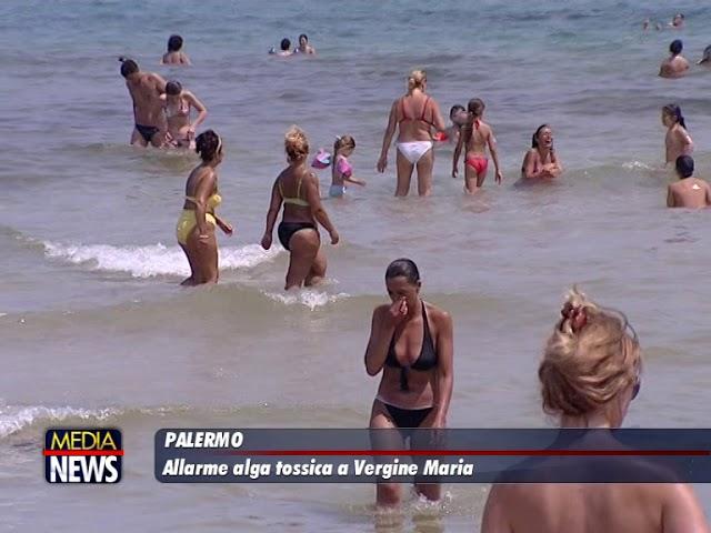 Allarme a Palermo, rilevata alga tossica a Vergine Maria ed in parte della costa