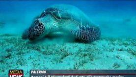 Domani è il Tartaday, numerose iniziative anche in Sicilia dedicate alle tartarughe marine