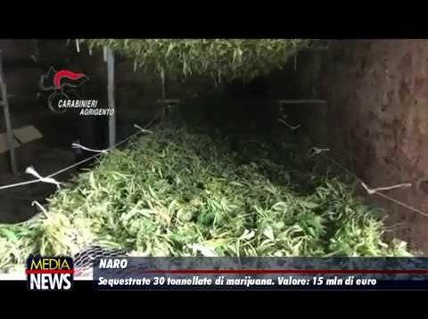 Marijuana, sequestro da record nelle campagne di Naro: 3 persone arrestate