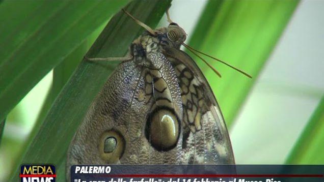 Palermo, la casa delle farfalle apre nei giardini di Palazzo Riso