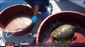 Tre Caretta caretta tornano in mare: c'è anche Samuele, la tartaruga avvistata dal bimbo in aliscafo