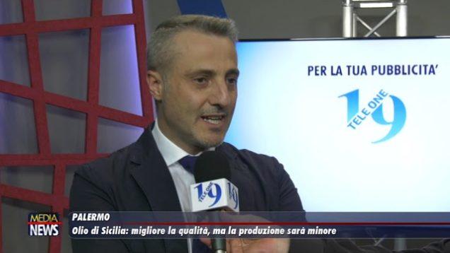 Olio di Sicilia: migliora la qualità, ma la produzione sarà minore