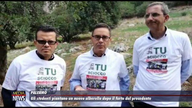 Palermo. Gli studenti piantano un nuovo alberello dopo il furto di quello precedente