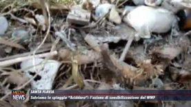 """Santa Flavia. Salviamo """"L'Aciddara"""": l'azione di sensibilizzazione del WWF"""
