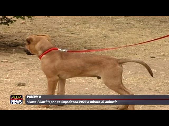 Palermo. #Buttaibotti: per un Capodanno 2020 a misura di animale