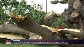 Palermo.Tempesta di vento sulla provincia: alberi e cornicioni abbattuti