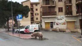 In giro non c'è un porco… anzi no!!!