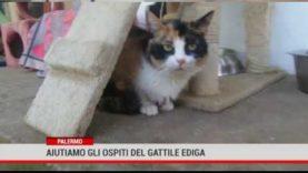 Palermo. Aiutiamo gli ospiti del gattile Ediga