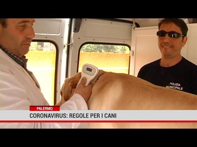 Palermo. Coronavirus: regole per i cani
