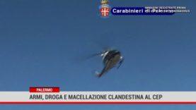 Armi, droga e macellazione abusiva: coppia arrestata più volte in una settimana a Palermo