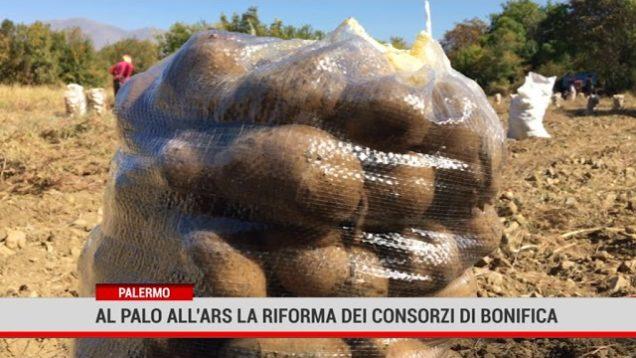 Palermo. Al palo all'Ars la riforma dei consorzi di bonifica