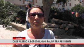 Palermo. Cade albero a Borgo nuovo: paura tra residenti