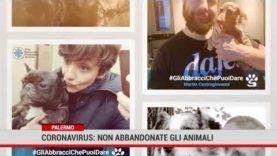 Palermo. Coronavirus: non abbandonate gli animali
