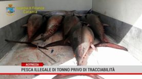 Acitrezza. Pesca illegale di tonno privo di tracciabilità