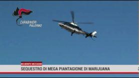Belmonte Mezzagno. Sequestro dei  carabinieri di un terreno  con quasi 400 piante di cannabis.