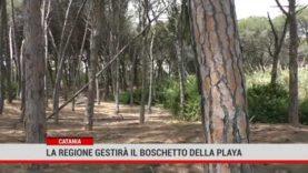Catania. La Regione gestirà il boschetto della Playa