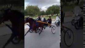 Nulla frena l'illegalità, corsa clandestina di cavalli per le strade di Palermo nonostante il blocco