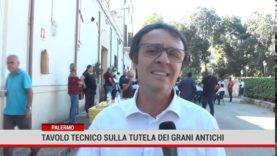 Palermo. All'Istituto Zootecnico  un tavolo tecnico sulla tutela  dei grani antichi di Sicilia.