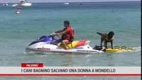Palermo. I cani bagnino salvano una donna a Mondello