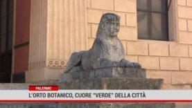 """Palermo. L'orto botanico, cuore """"verde"""" della città"""