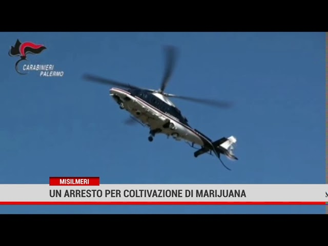 I carabinieri scoprono una piantagione di marijuana a Piano Stoppa