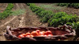 19LIVEinTOUR – #Valledolmo, il Pomodoro Siccagno. Conduce RobertoMarcoOddo, una produzione MediaOne.