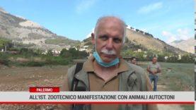 Palermo. AlI'Istituto zootecnico sperimentale  manifestazione con animali autoctoni