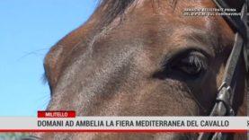 Catania. Domani ad Ambelia la Fiera Mediterranea Del Cavallo