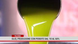 Palermo. Olio: produzione con perdite dal 10 al 60%