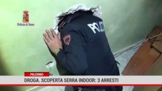 Droga. Scovata a Palermo una serra indoor, tre arresti