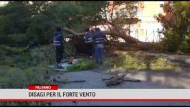 Palermo. Disagi per il forte vento