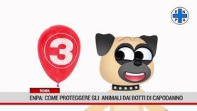 Roma. I consigli dell'Enpa per proteggere gli  animali dai botti di Capodanno