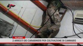 Villafrati. 2 arresti dei carabinieri per coltivazione di cannabis