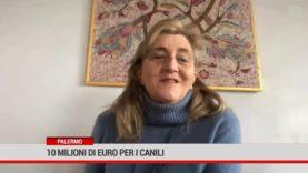 Palermo. 10 milioni di euro per i canili